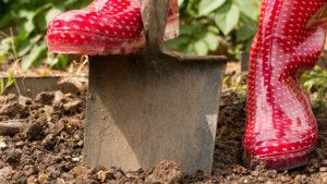 Red wellies digging garden