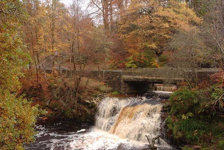 Blackling Hole waterfall in Hamsterley forest. Kielder FD