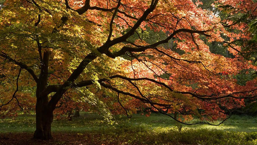 Westonbirt Arboretum - Japanese Maples