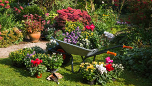 Plants for planting in September Pic: Rex/Shutterstock