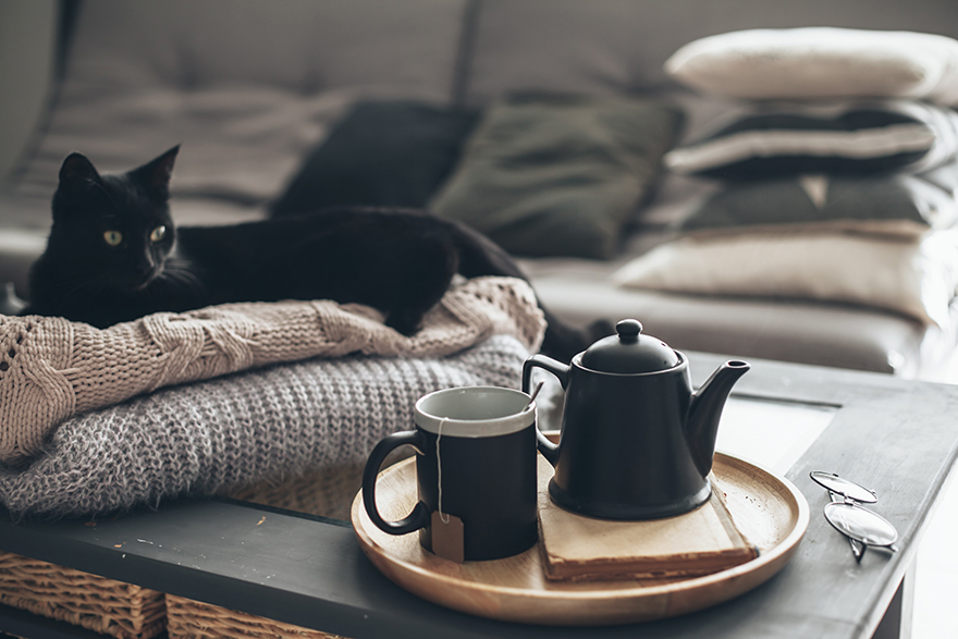 Cosy living room with black cat and tea tray