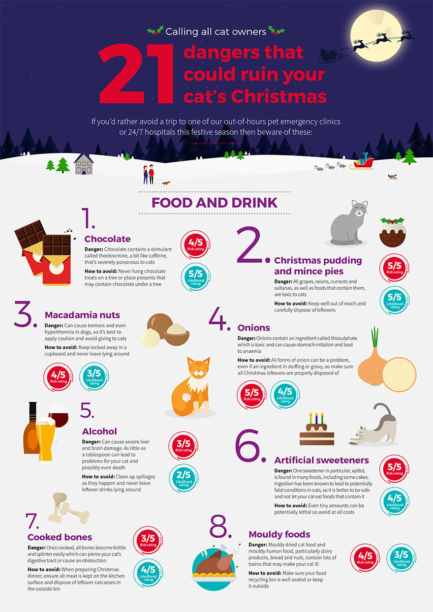 Cat Infogram page 1