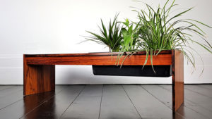 A coffee table with plants