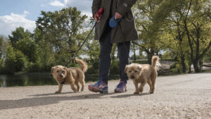 """Images of walking feet for the CRUK's """"Walk all over Cancer"""" event."""