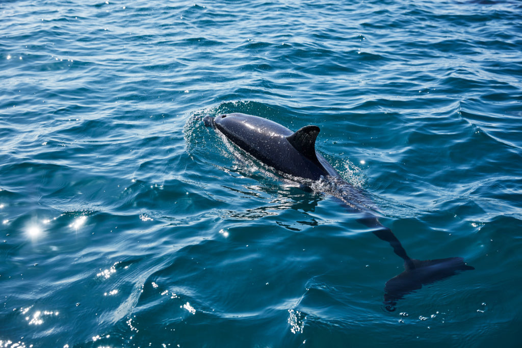 Dolphin watching in Wales