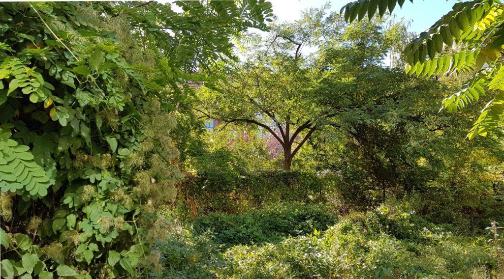 Wild, overgrown garden