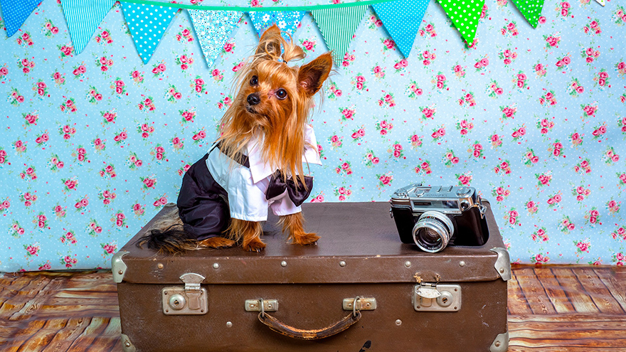 Dog in costume sitting on suitcase