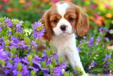 An adorable puppy sits in a bright, colorful garden setting.