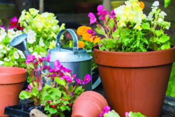 pretty plant pots