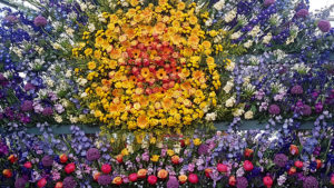 An explosion of flower colour in the Great Pavilion