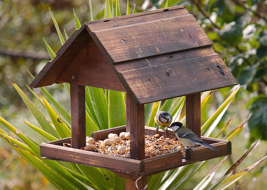 Two garden birds; blue tit and coal tit feeding from a bird table. Pic: Istockphoto