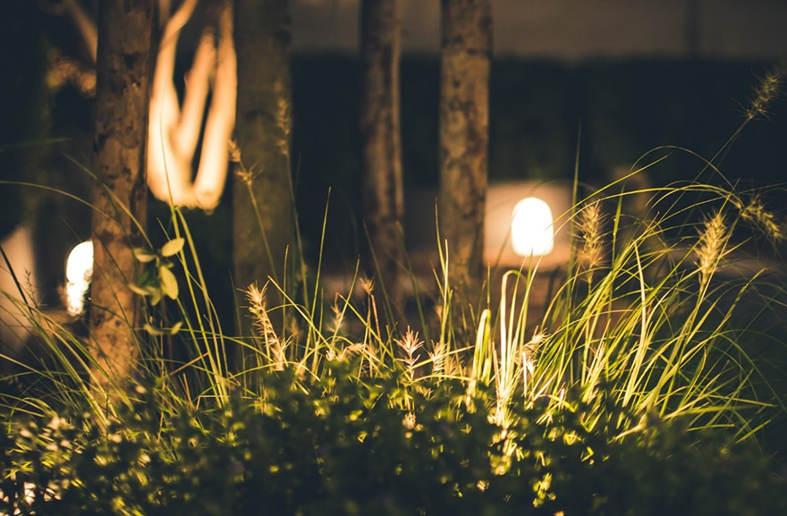 A garden lit up at night