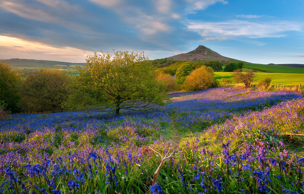 Roseberry Topping Pic: Istockphoto