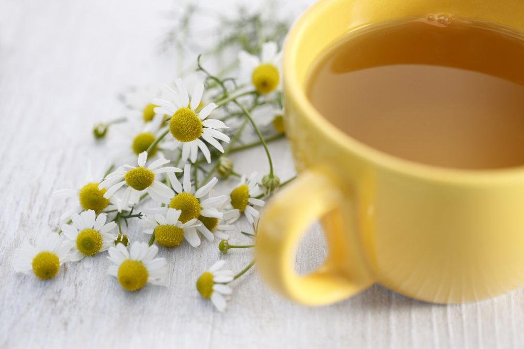 Chamomile tea with fresh chamomile.