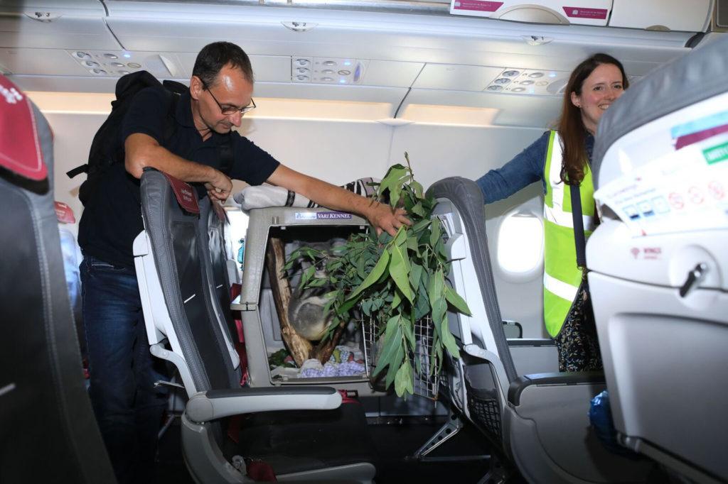 Tanami on the flight