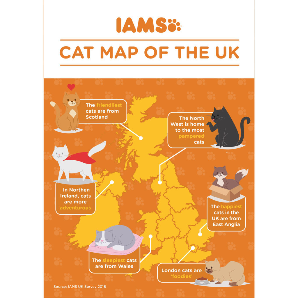 Infographic of different cat characteristics around UK (all info in text)