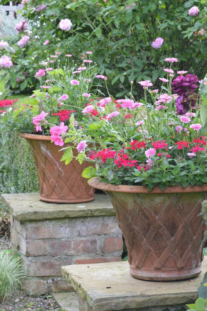 Flowers in plant pots