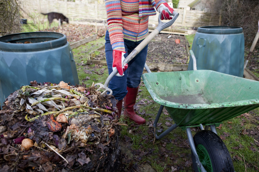 """Woman gardener turning compost, putting the undecomposed food waste back into a composting bin, with the ready to use compost just below."