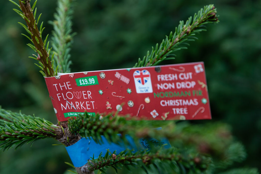 Christmas tree and label
