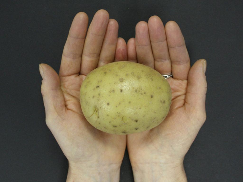 Hands holding a potato