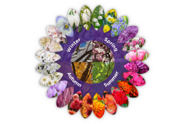 Colour wheel of plants