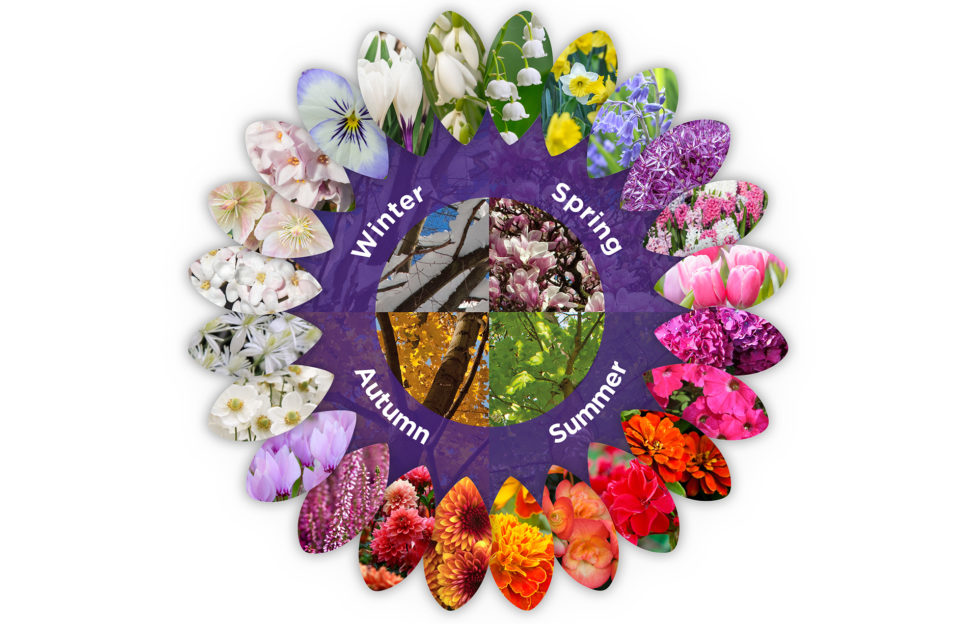 Colour wheel of plants