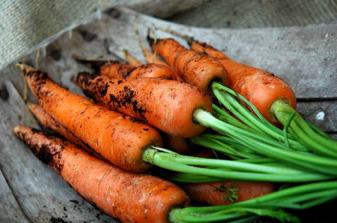Freshly pulled carrots Pic: Istockphoto