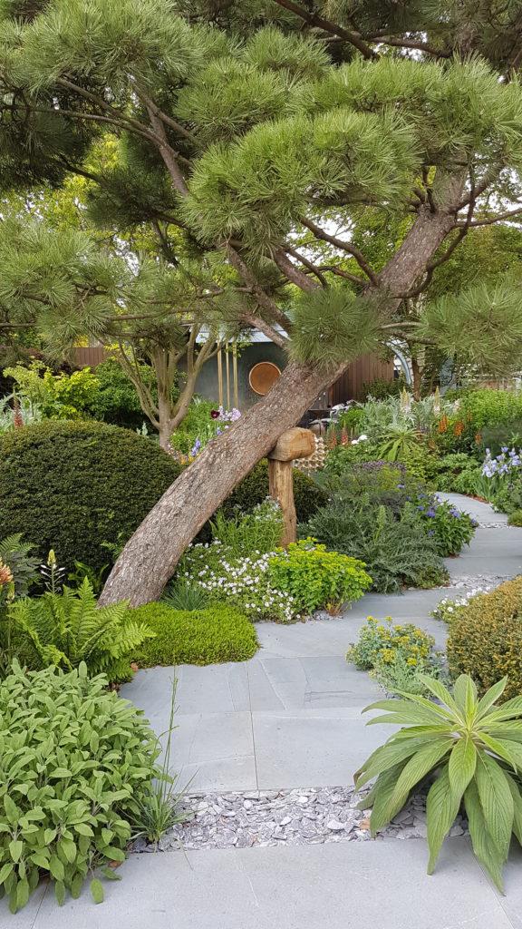 Leaning pine garden