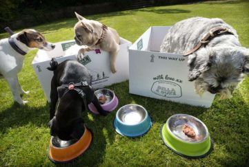 Dogs playing in boxes and eating Bella and Duke dog food