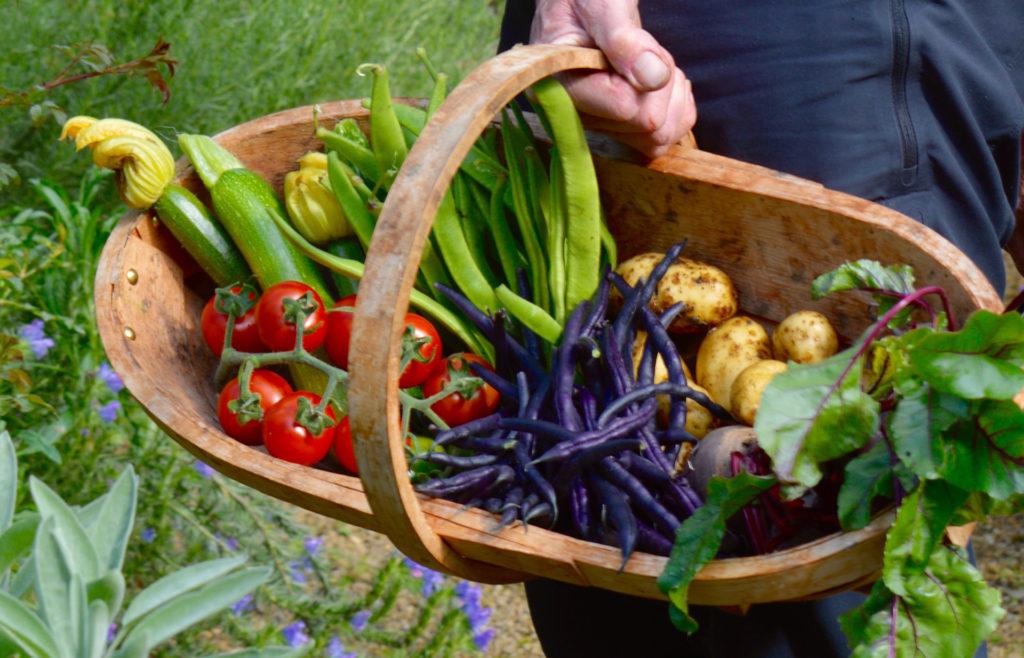 Trug of vegetables fresh from garden