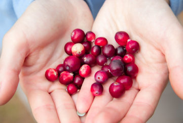 Woman hands holding ripe red cranberries