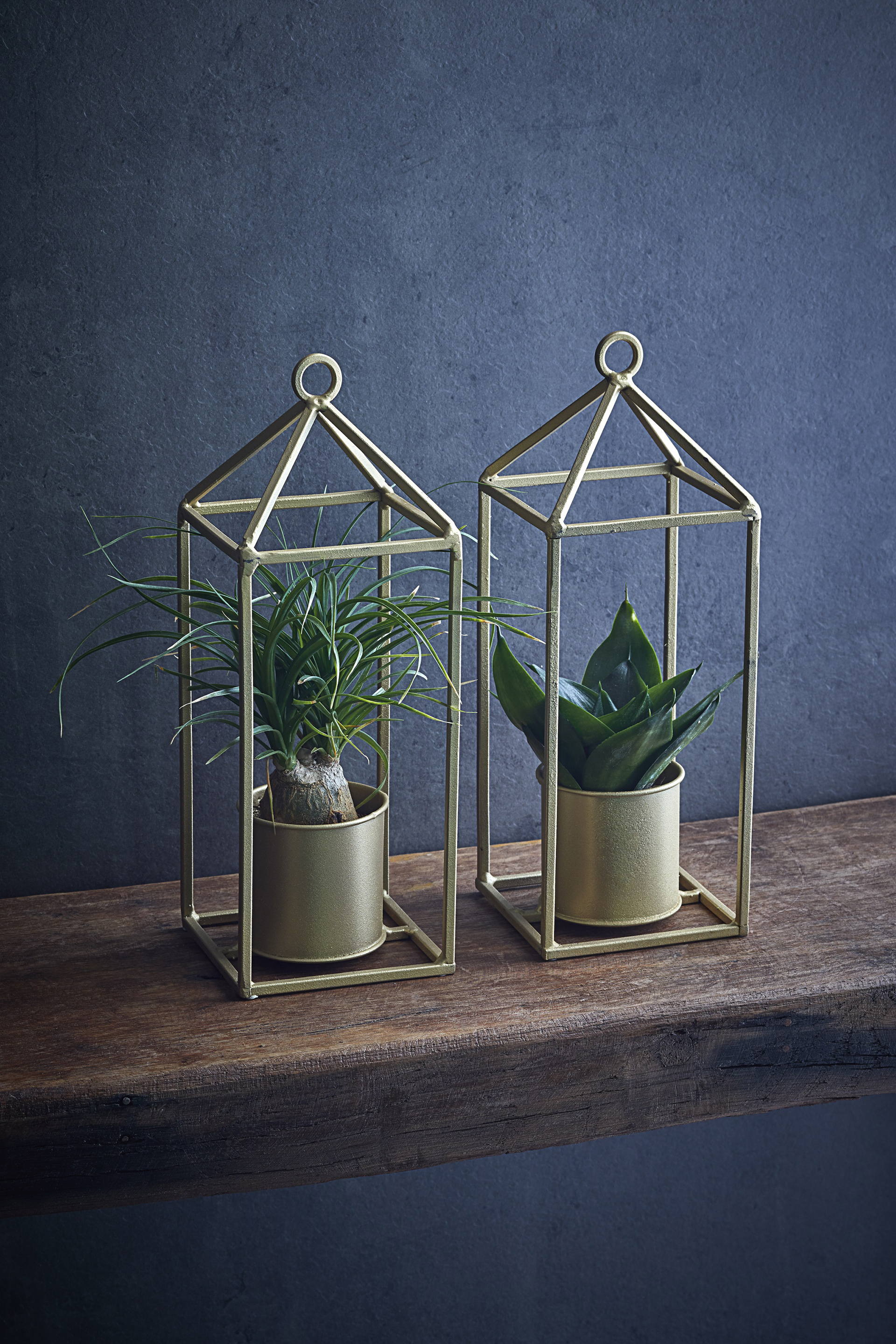 Single air purifying plant in gold frame