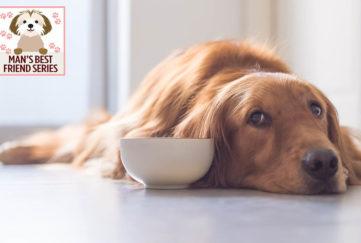 Sad looking dog lying on floor beside food bowl
