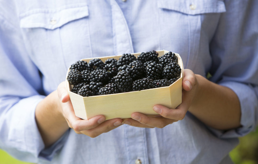 Woman Holding Tray Of Fresh Blackberries